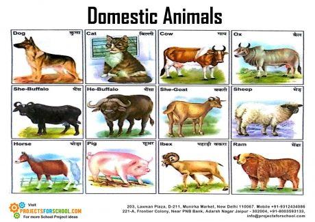 ANIMALS-P.1 1