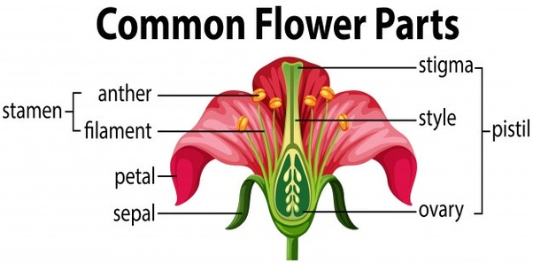 EXTERNAL AND INTERNAL FEATURES OF FLOWERING PLANTS