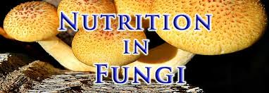 NUTRITION IN FUNGI