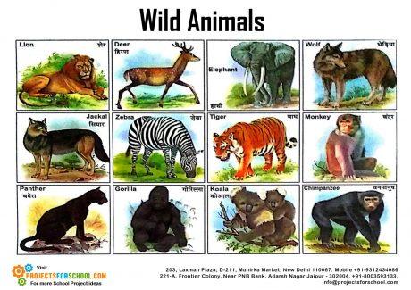 ANIMALS-P.1 2