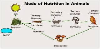 NUTRITION IN ORGANISMS