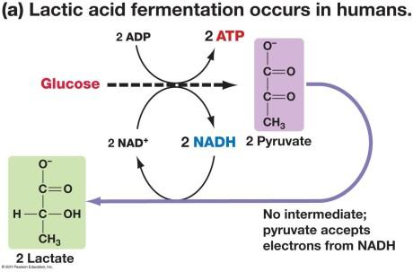 fermentatiomn
