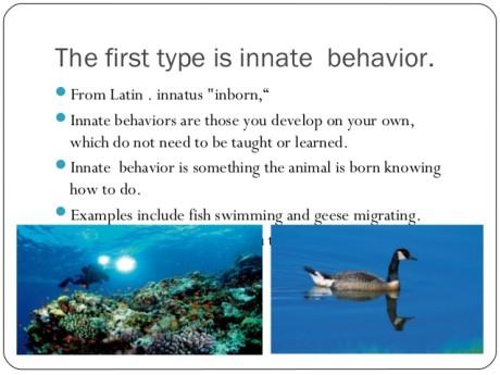 innate behaviour