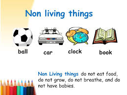 PLANTS AND NON LIVING THINGS-P.1 2