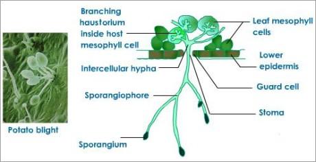 nutrition fungi