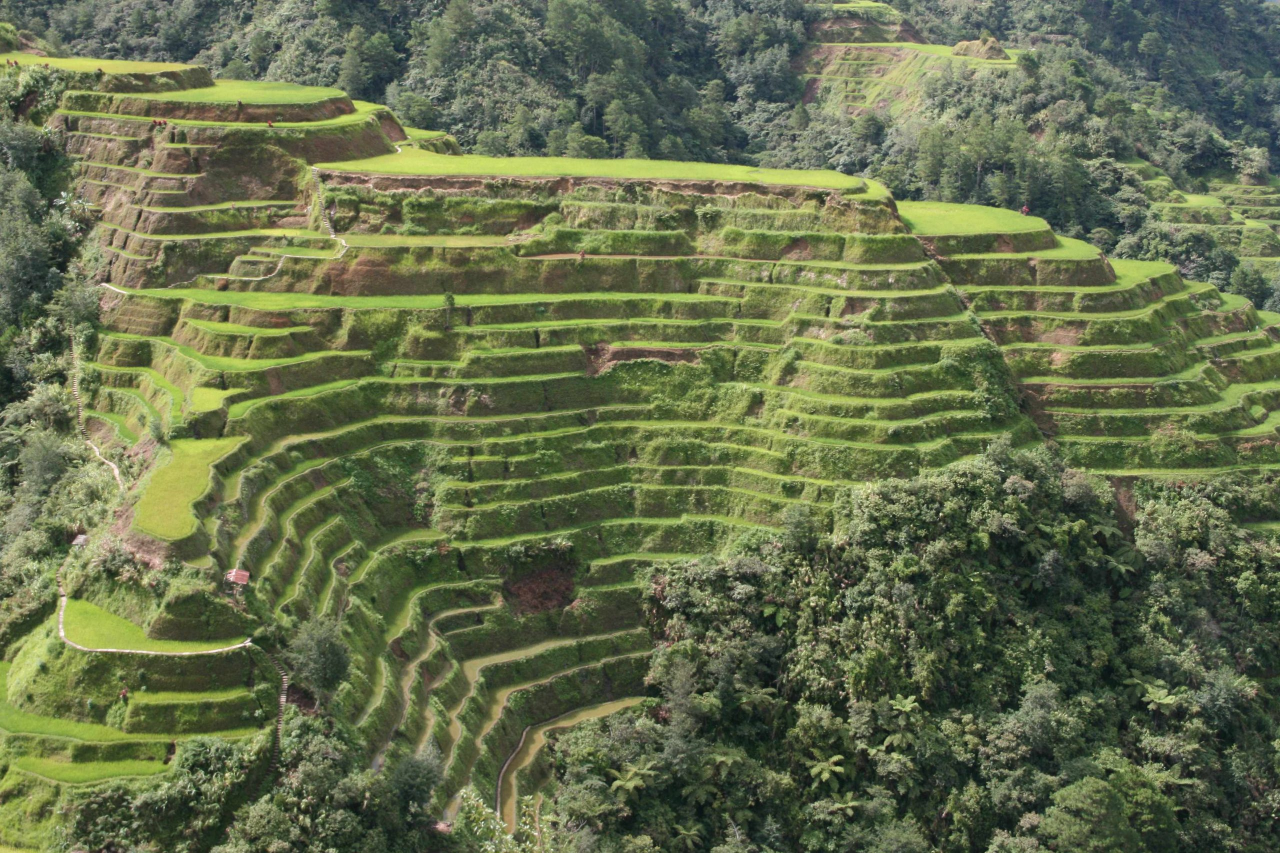 Agriculture O-LEVEL- TERRACING