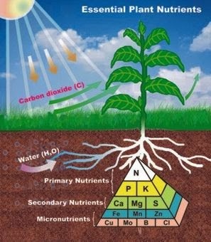 AGRICULTURE - PLANT NUTRIENTS