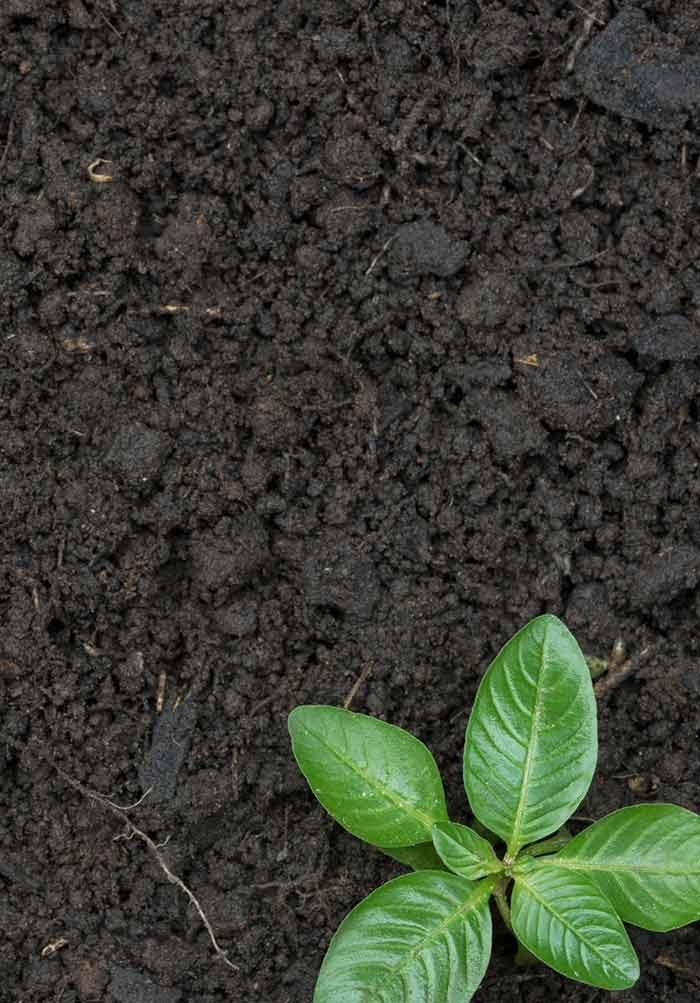 AGRICULTURE - SOIL PH
