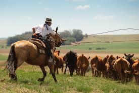 ranching in argenita
