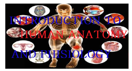 INTRODUCTION TO HUMAN ANATOMY AND PHYSIOLOGY 6