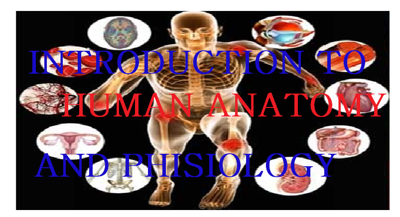 INTRODUCTION TO HUMAN ANATOMY AND PHYSIOLOGY 2