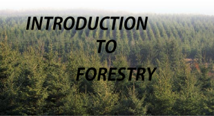FORESTRY 6