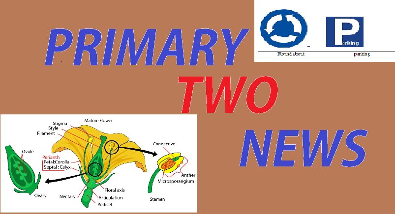 PRIMARY TWO NEWS 2