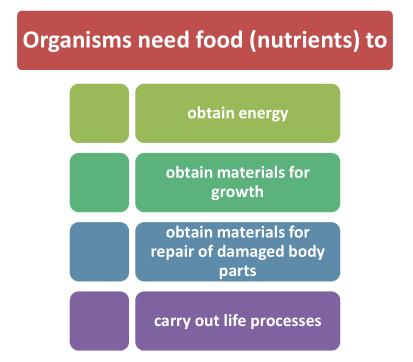 organisms-need-food