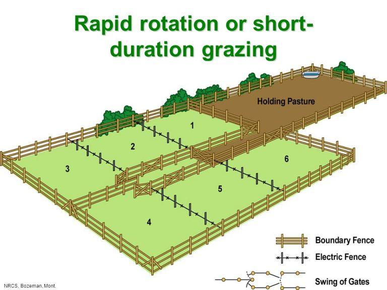 AGRIC6: Pasture Management 1