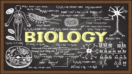 BIOLOGY SENIOR SIX 22