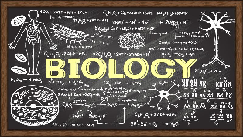 BIOLOGY SENIOR SIX 2