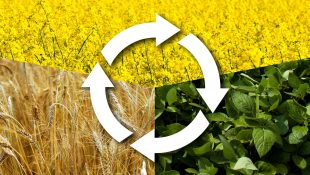 AGRIC6: CROP PRODUCTION IV 2