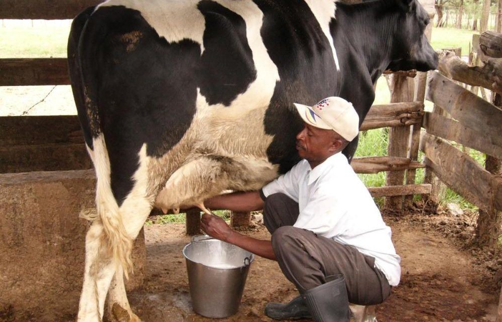 AGRIC6: Dairy Production 1