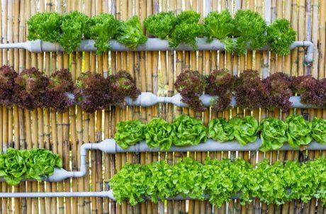 AGRIC6: Urban and Peri-Urban Farming 1