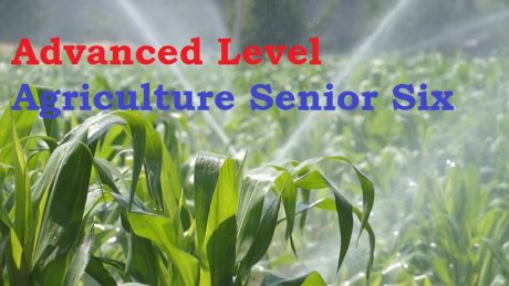 ALAGRIC6: ADVANCED LEVEL AGRICULTURE SENIOR SIX 9