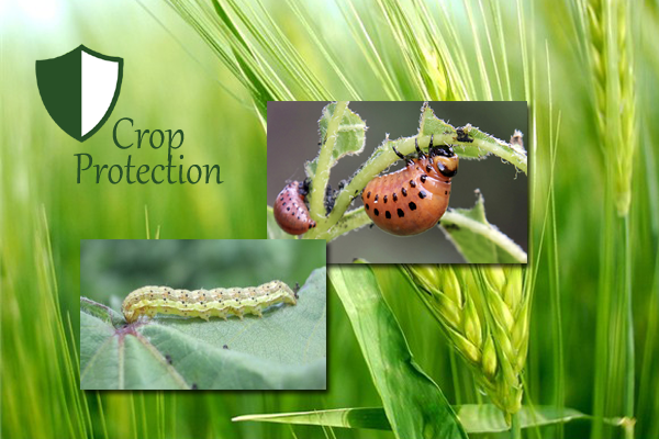 AGRIC6: Crop Protection 2